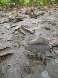 F.cat tracks