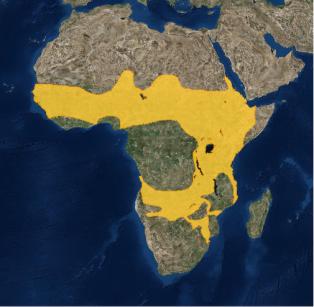 vulture map