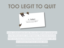 vulture-postcards-06